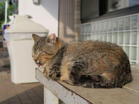 鍋割山大倉猫