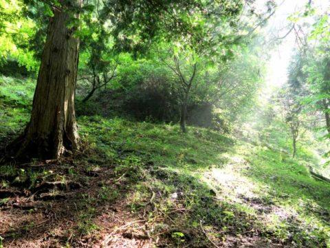 鍋割山木漏れ日