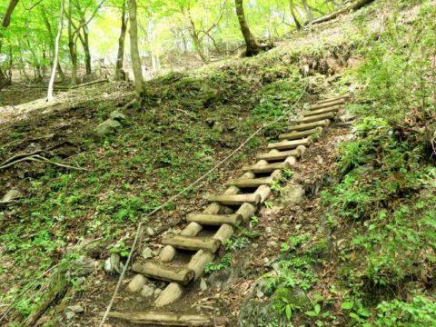 鍋割山木段登山道