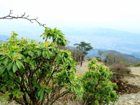 大倉尾根植物