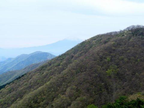 大倉尾根富士山