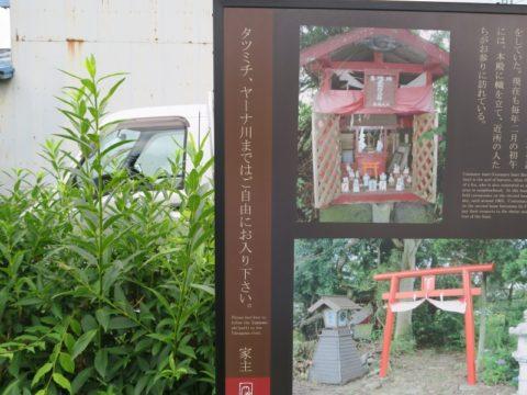 fujiyoshida_oshi55