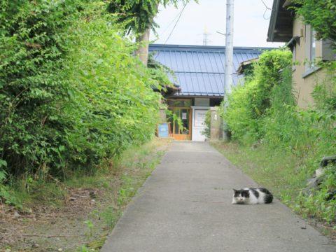 fujiyoshida_oshi56