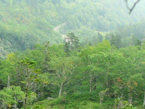 赤岳登山道から見える車道