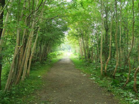 赤岳登山口から銀泉台への道