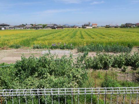 nagata_in_kanoka08