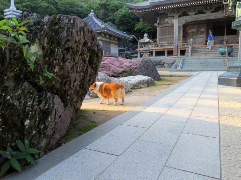 金剛福寺境内 犬