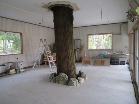 雲辺寺通夜堂内の木