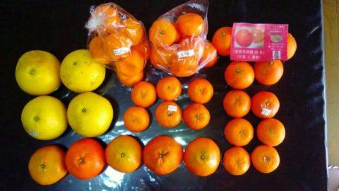 愛媛冬の柑橘